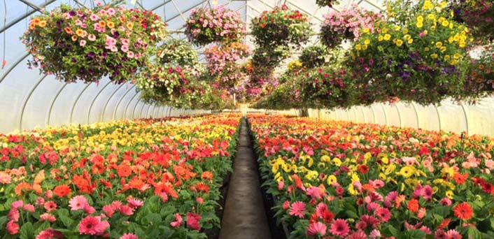 Spring plants and flowers seasonal plants frysville farms spring mightylinksfo Gallery